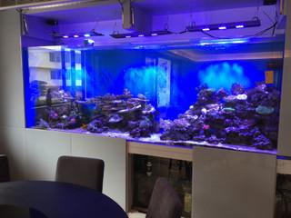跑馬地3米珊瑚及海水魚缸