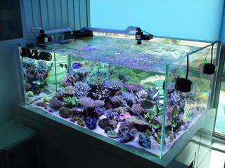 客人的魚缸榮獲季度最佳魚缸