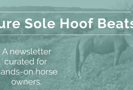 February Hoof Beats- Spring into February with 15% off!