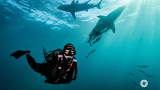Sardine Run Expedition - South Africa 2018