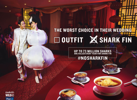 WildAid and Plan B Call on Thailand to Celebrate Without Shark Fin