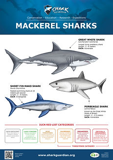 Mackerel sharks LR Pic.jpg