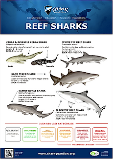 Reef Sharks LR pic.png