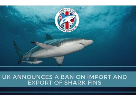 UPDATE: The UK Government taking the lead to introduce a ban on the shark fin trade