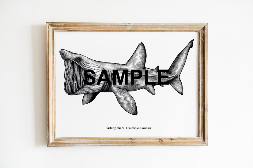 Basking Shark Print LIMITED EDITION