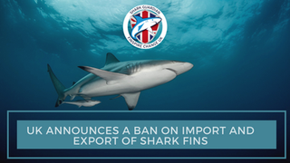 THE UK BANS IMPORT AND EXPORT of shark fins following the successful campaign by Shark Guardian