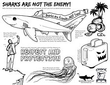 Shark Guardian - Sharks are not the enem