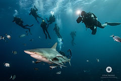 Shark diving expeditions