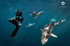 Shark research