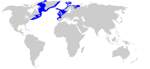 By Chris_huh - Compagno, Leonard; Dando, Marc & Fowler, Sarah (2005). Sharks of the World