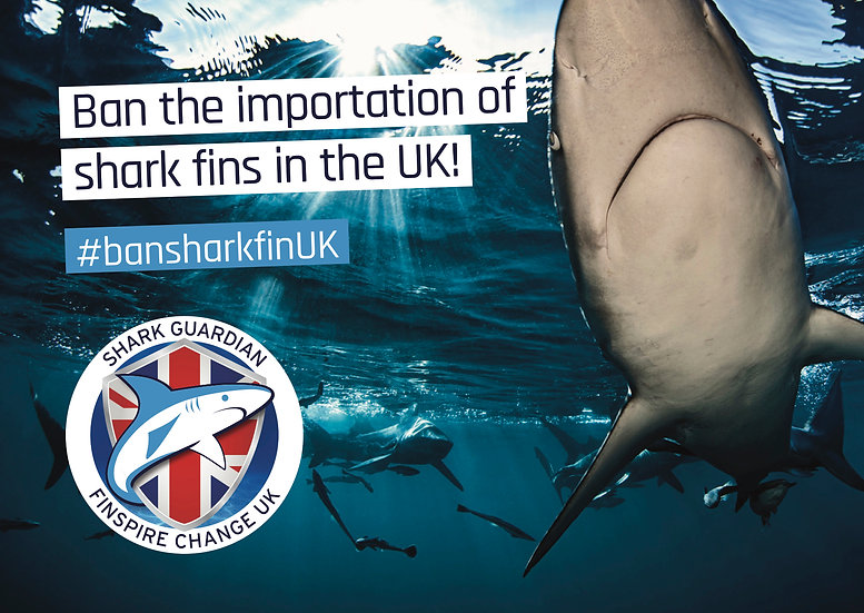Ban Shark Fin UK Postcards
