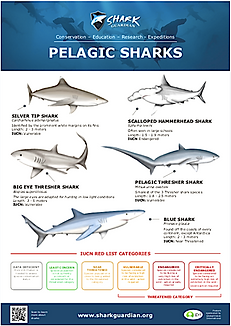 Pelagic Sharks LR pic.png