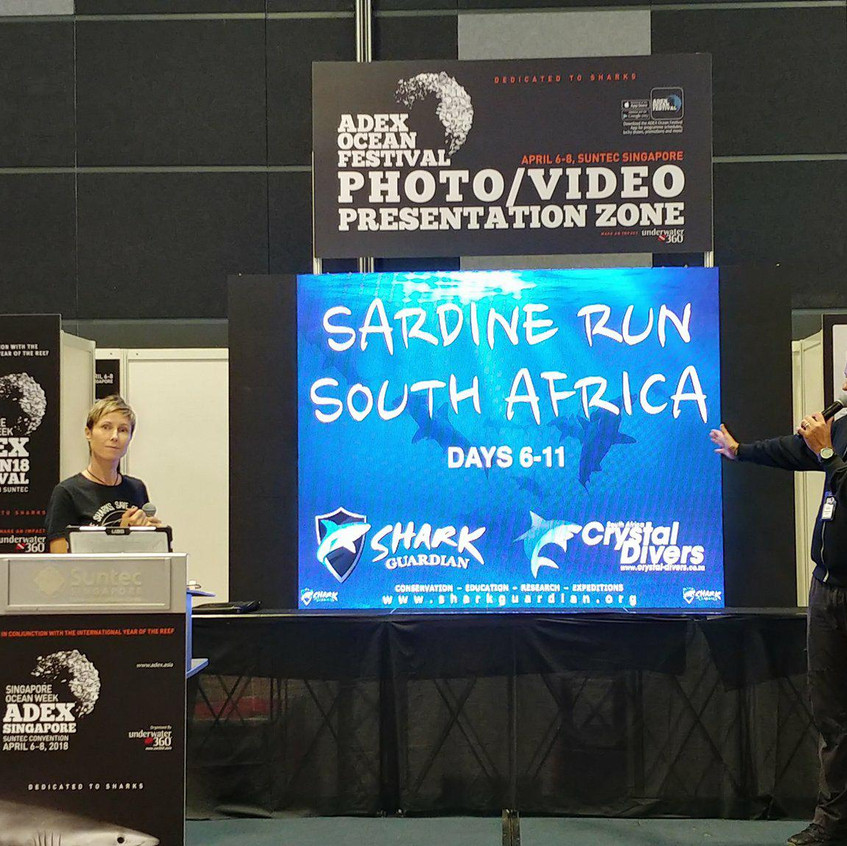 Sardine Run info South Africa