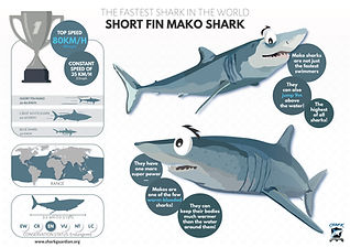 Short fin Mako Shark poster