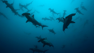 Urgent call from scientists to create new protected zone in Pacific
