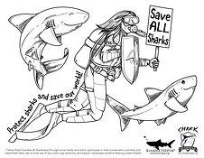 Shark Guardian Protect Sharks.jpg