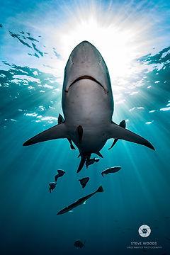 Shark Guardian membership