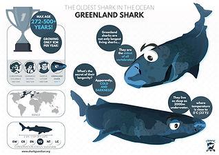Greenland shark poster