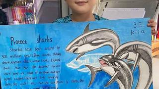 More fantastic shark-work following Shark Guardian school presentations