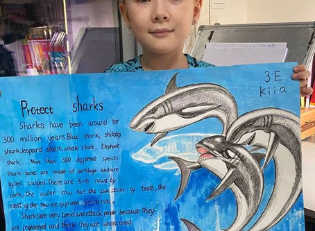 More fantastic shark-work following Shark Guardian school presentations