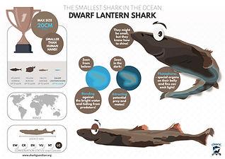 Dwarf Lantern shark poster