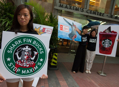 Starbucks and Shark Fin selling partner Maxim's under pressure