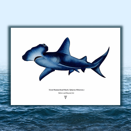 LIMITED EDITION Hammerhead Shark Print