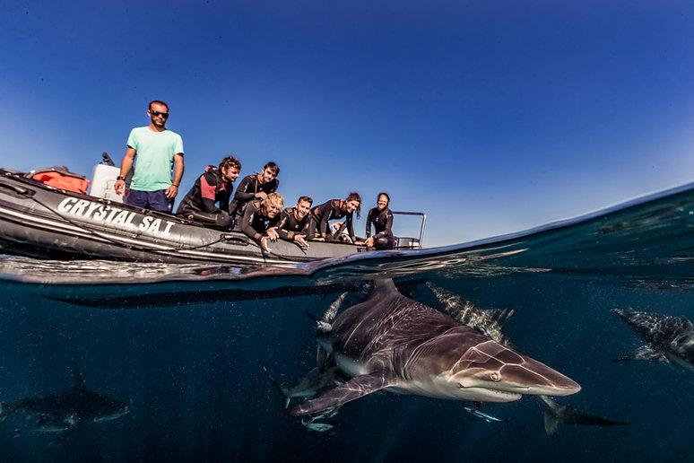 Meet the Shark Guardian team