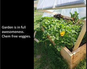 Full garden.jpg
