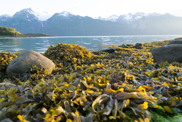 Mud Bay Alaska