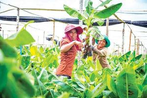 China Will Expand Banana Imports With Cambodia And