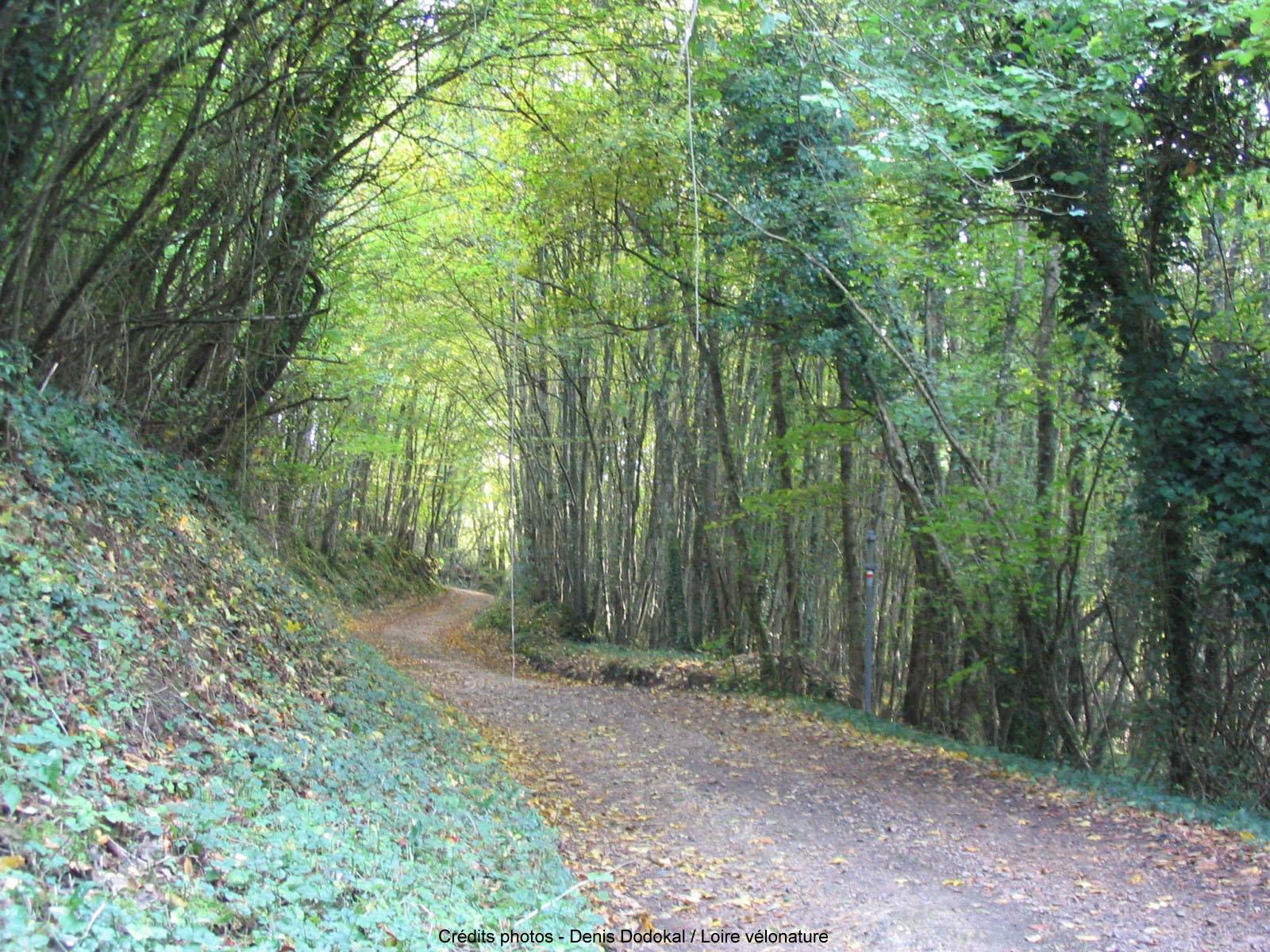 en_forêt.jpg