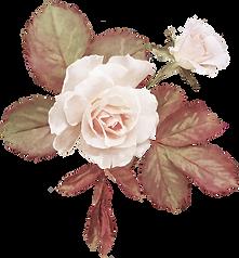 Vintag rose
