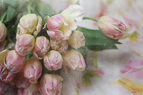 Fine Art Print: Tulips