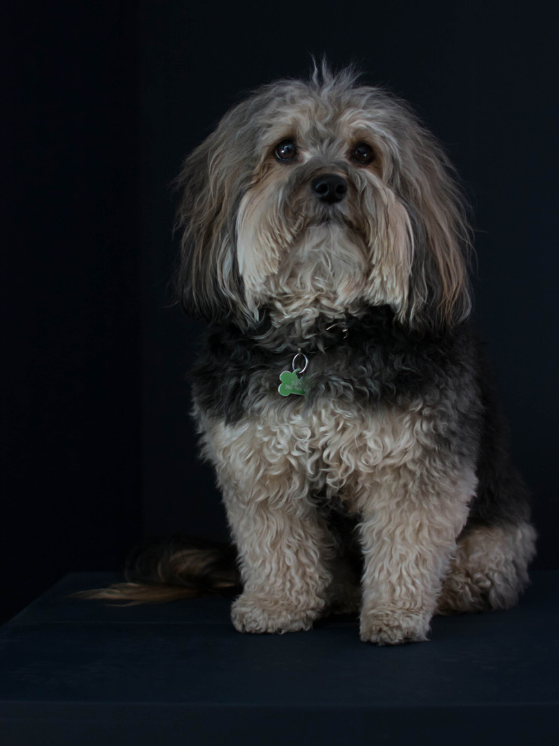 Portraits for pets Deanna Dusbabek Photography