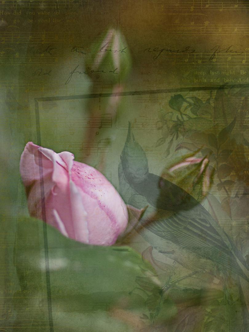 Fine art floral photography by Deanna Dusbabek Photography