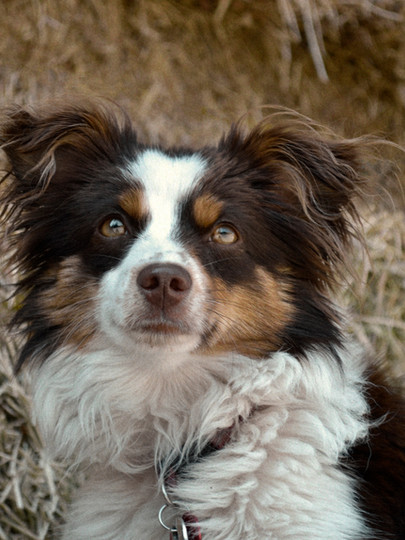 Portraits for pets Deanna Dusbabek Photography