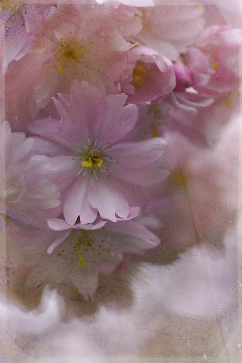 Fine Art Print: Apple Blossoms