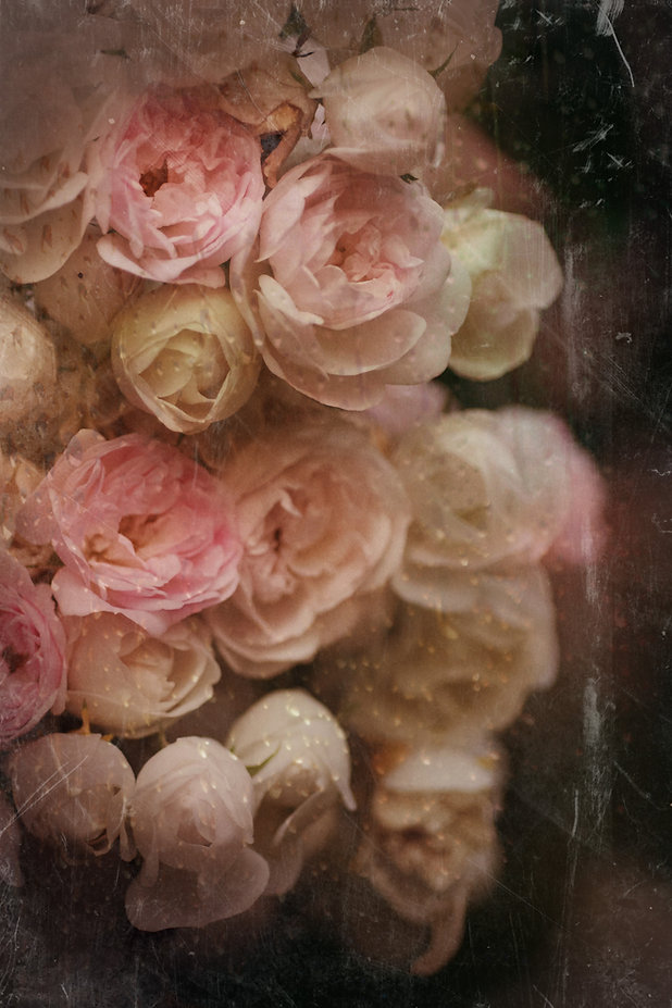 Deanna Dusbabek Photography fine art flower photography