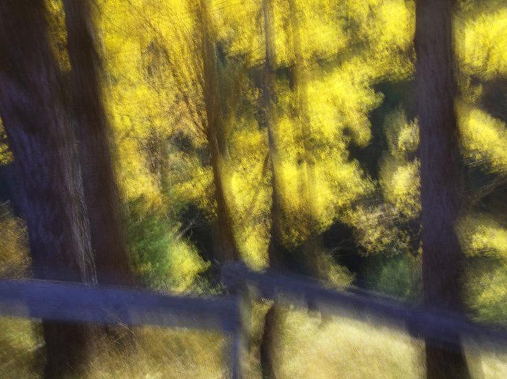Zermatt arbres jaunes