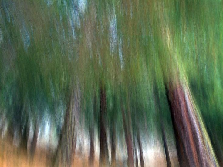Zermatt arbres verts