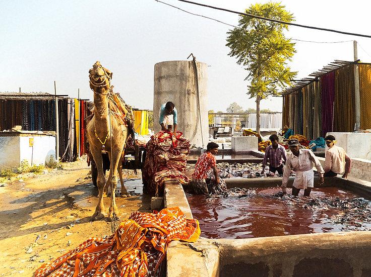 Inde chameau