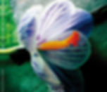 livre sur le cervin, matterhorn, zermatt signé et numéroté par le photographe