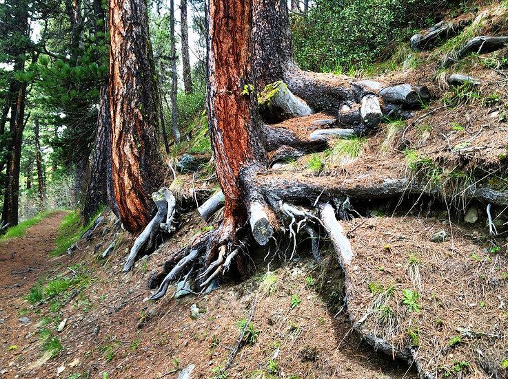 Zermatt arbres rouge