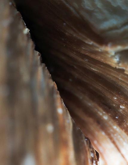 BreadUnique-30 - Format 40x50cm
