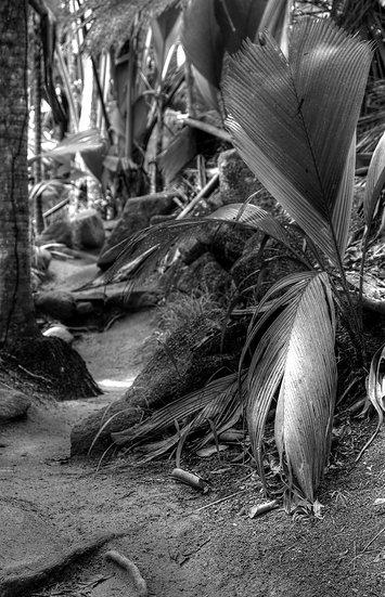 Seychelles vallée de Mai-3