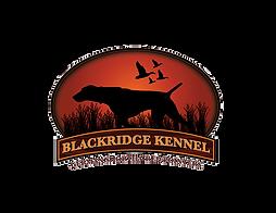 German Shorthaired Pointer Breeder Blackridge Kennels Schwenksvill