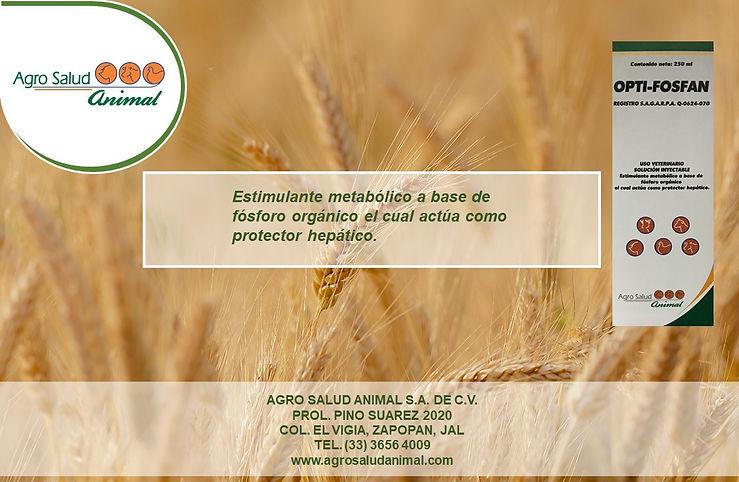 Diseños Agro Salud (2).JPG