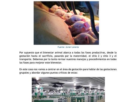 BIENESTAR ANIMAL- MITOS Y REALIDADES