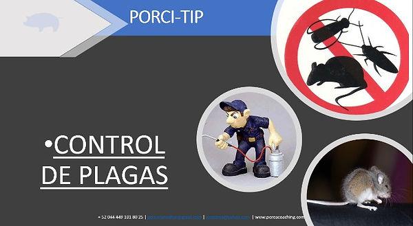 Porci Tip 24.jpg